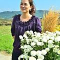 2011 1114 杭菊 010.jpg
