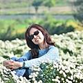 2011 1114 杭菊 047.jpg
