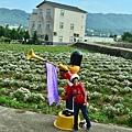 2011 1114 杭菊 012.jpg