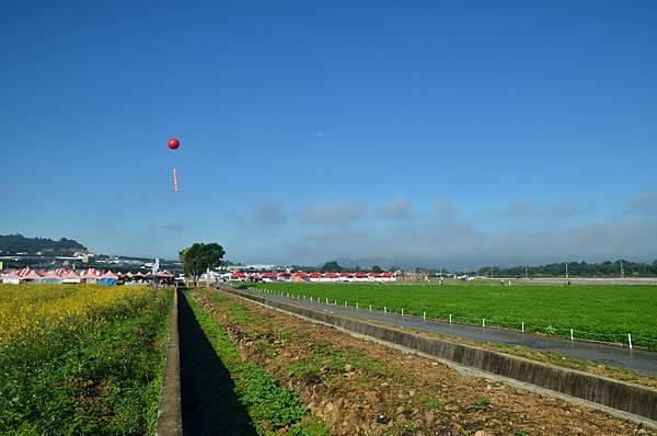 2011 1115 新社花況 001.jpg
