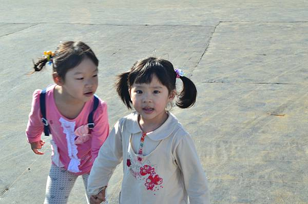 2011 1115 新社花況 033.jpg