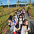 2011 1115 新社花況 121.jpg