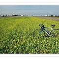 1227 002-好美的油菜花.jpg