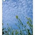 1227 104-好柔的雲.jpg