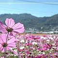 1125-新社花海 48.jpg
