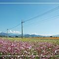 1125-新社花海 69.jpg