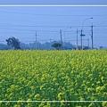 2010 油菜花.jpg