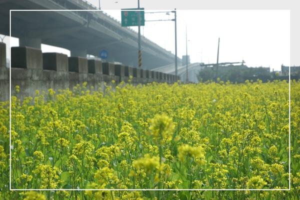 2010 油菜花 (15).jpg