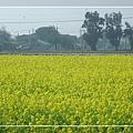 2010 油菜花 (20).jpg