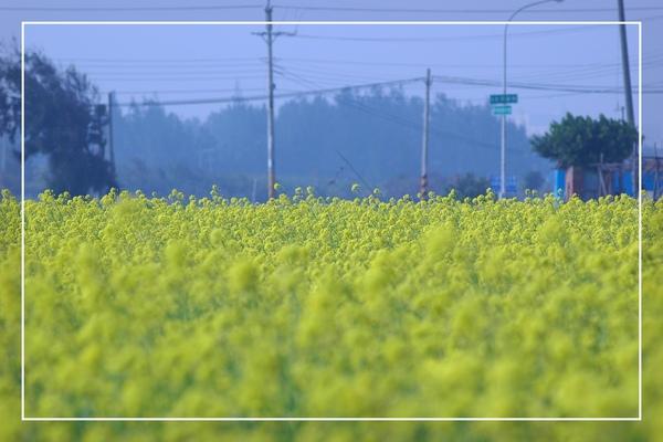 2010 油菜花 (48).jpg