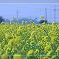 2010 油菜花 (52).jpg