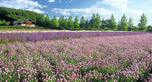 春の彩りの畑.jpg