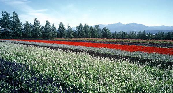 秋の彩りの畑.jpg