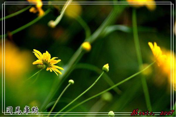 DSC_15670.jpg