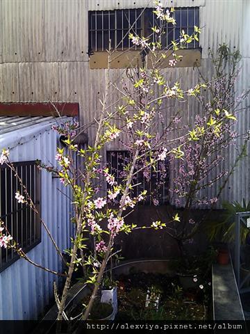 C360_2011-02-27 10-33-51.jpg