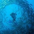 Tulamben Wreck & Jack Fish