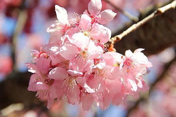 紅粉佳人(二)
