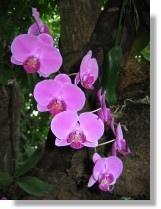 93-台中-熱帶雨林館
