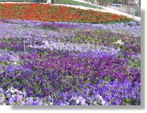 94-彰化-花卉博覽會