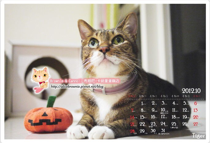 2012_10_Tiger.jpg