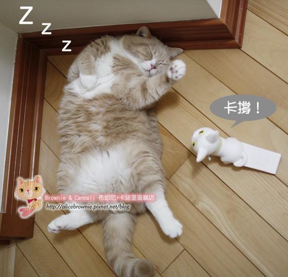 C_12627_Sleeping.JPG