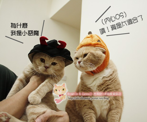 D_04322_Halloween.JPG