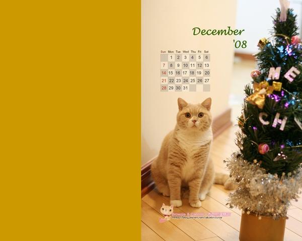 卡諾里08年12月桌布(適合1280x1024)