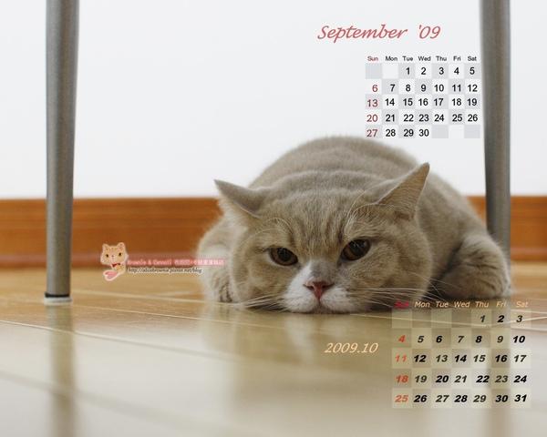 卡諾里09年9月電腦桌布(適合1280x1024)