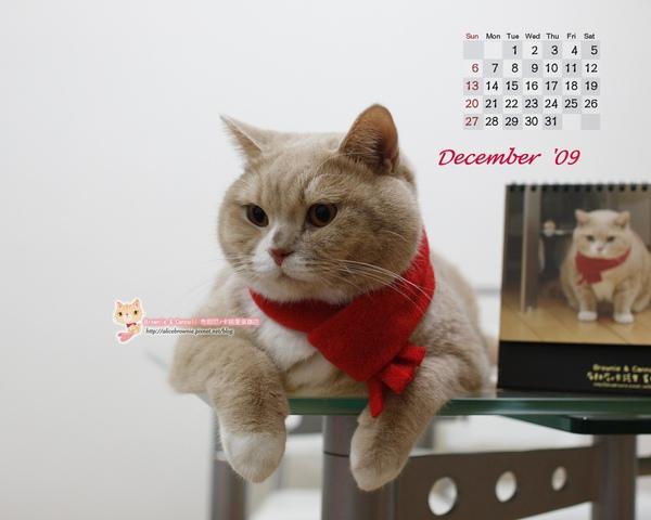 卡諾里09年12月桌布(適合1280x1024)