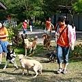 961027 狗友會北區第八次狗聚-桃園仙谷