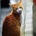 20090221街貓小朋友