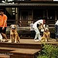 20090708_079_1.jpg