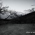 20100109_126cha.jpg
