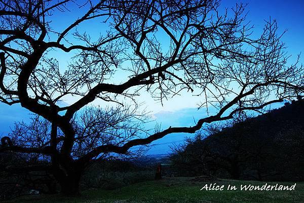 20100109_144cha.jpg