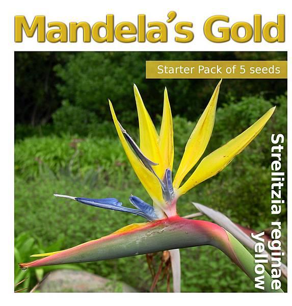 web_small-MandelaGold