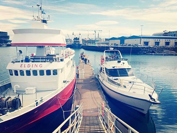 左邊大艘是賞鯨船,右邊才是賞鳥船_副本.jpg