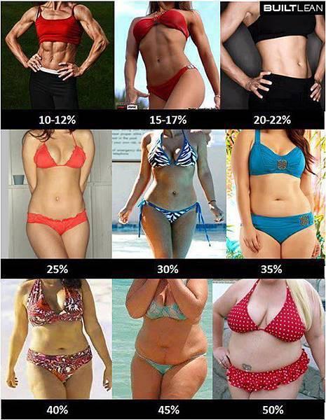 體脂肪示意圖女生