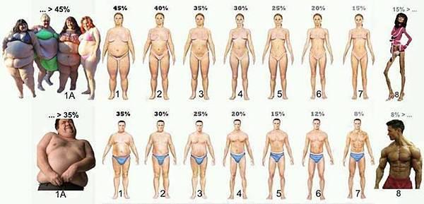 體脂肪示意圖
