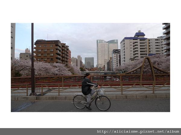 20101105_105332_P1060539.jpg