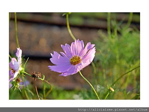 20110616_134522_DSC_7918_edited.jpg