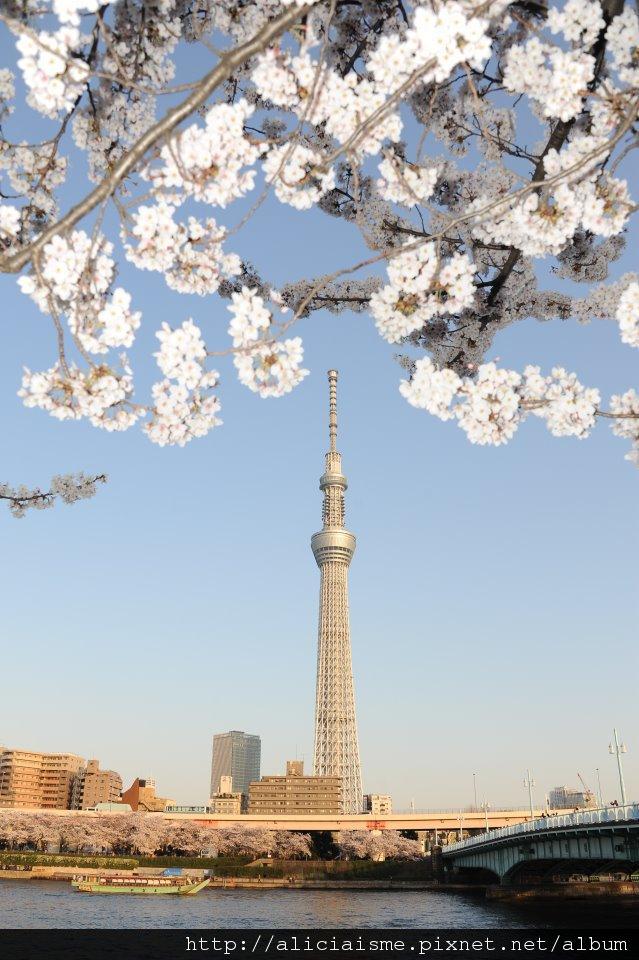 櫻花天空樹
