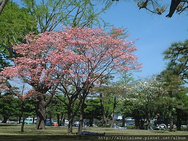 皇居前公園9