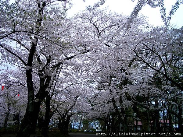 秋田-千秋公園 (32).JPG