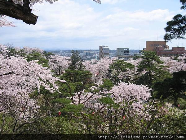 秋田-千秋公園 (63).jpg