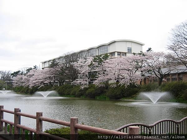 秋田-千秋公園 (68).jpg