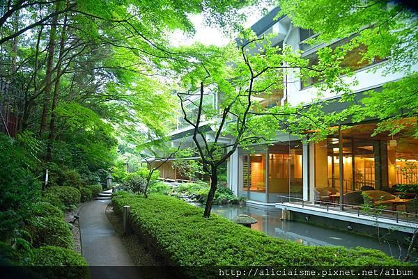 中庭 新緑.jpg