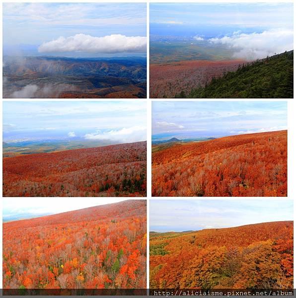 makephotogallery.net_1484881842.jpg