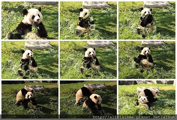 makephotogallery.net_1488272299.jpg