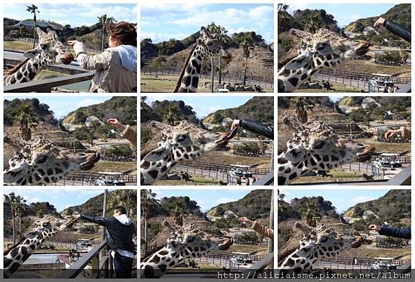 makephotogallery.net_1488272978.jpg