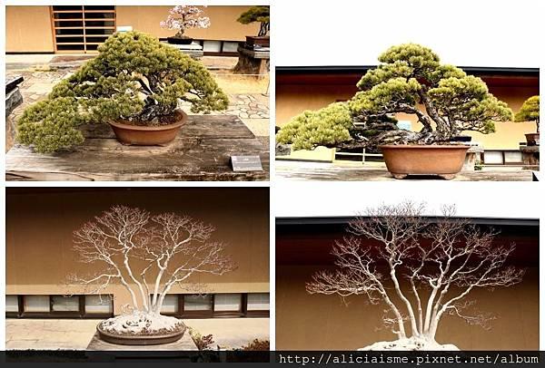 makephotogallery.net_1489903494.jpg